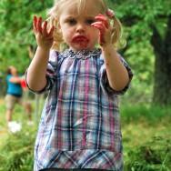 Wilda gillar körsbär